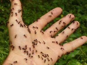 Alte furnici. De pe Facebook