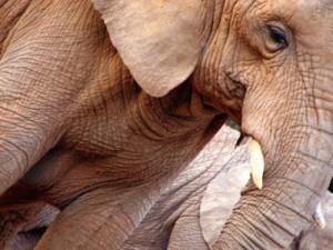 elefant-480x360