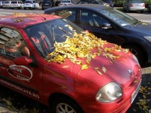 Pe Văcăreşti: frunzele de pe capotă-s, chiar ele, o bună poveste de toamnă
