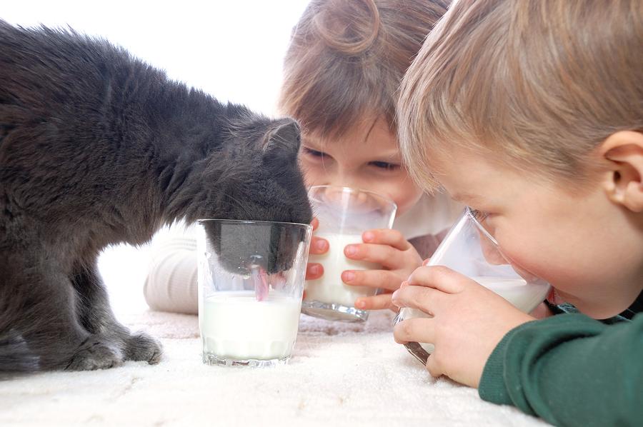 Doi copilaşi plus una bucată motan cenuşiu beau lapte: o scenă dintr-o zi senină, ai putea spune. Mare greşeală, de fapt: citeşte şi convinge-te de unul singur!