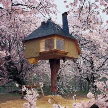 Dacă n-o fi de ajuns, mai construim câteva, în pomii din jur: cu grijă, însă, să nu stricăm florile...