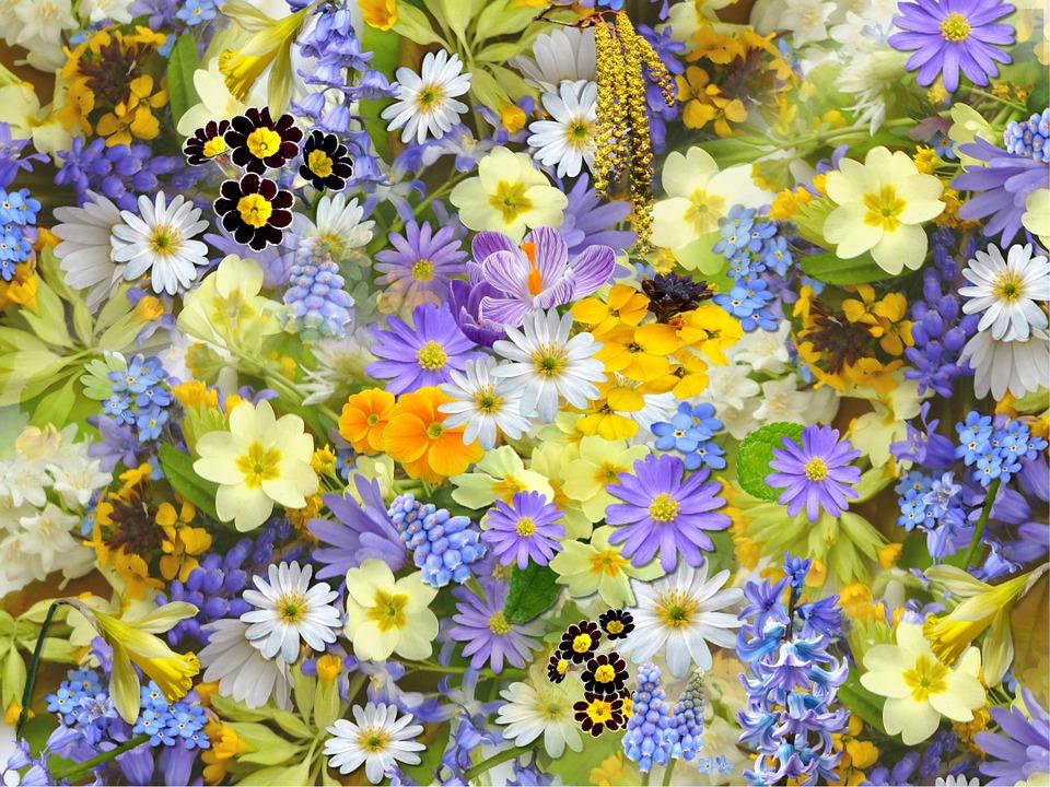 Tot pentru voi, doamnelor, alte flori, într-un format mai covenţional: grijă mare, să  nu vină frigul peste ele! LA MULŢI ANI, once again!