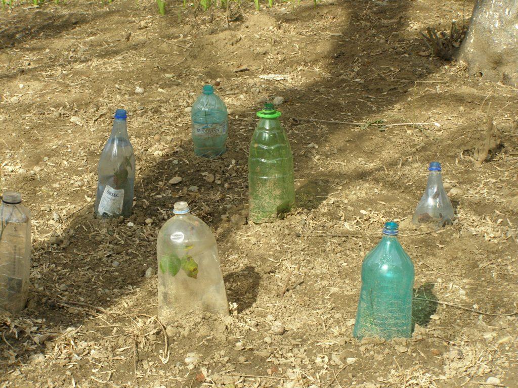 O parte din flori locuiesc sub incintele de plastic încă din toamnă, altele-s puse doar acum câteva săptămâni. Le-am protejat pe numitele flori cât am putut, cu succes, până acum. De-aici încolo, you might take care of them, doamnele mele!
